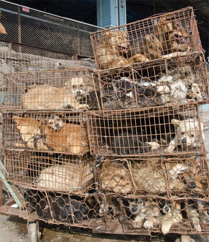 Inside Dog Abattoirs