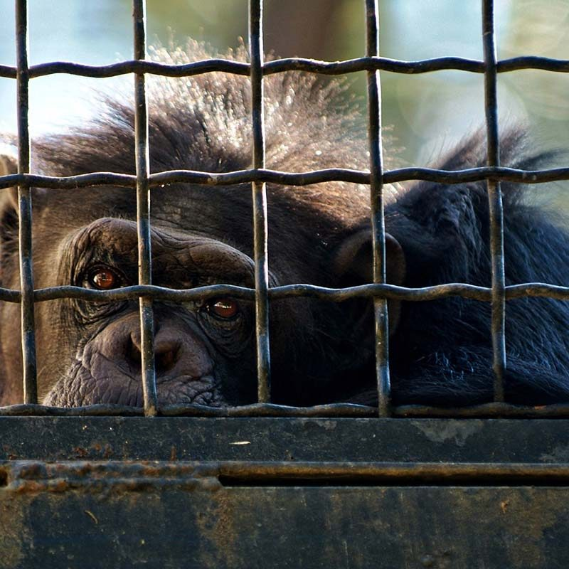 Neglect and Abuse Uncovered in 8 Spanish Zoos