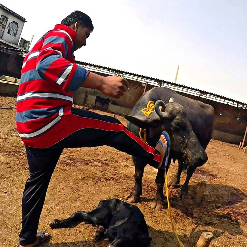 135 Dairy Facilities Investigated in India