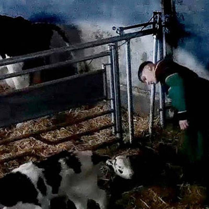Dairy Farm Worker Caught Red-Handed