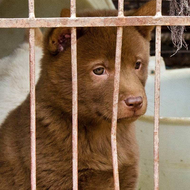 The Cruelty of the Dog Meat and Fur Trade