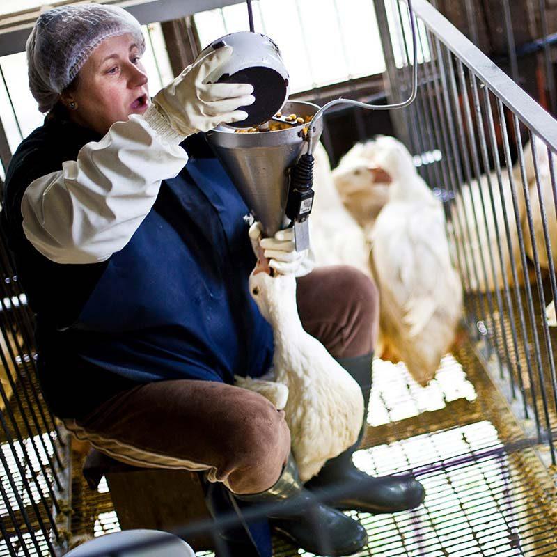 Momotegi Spanish Foie Gras Farm