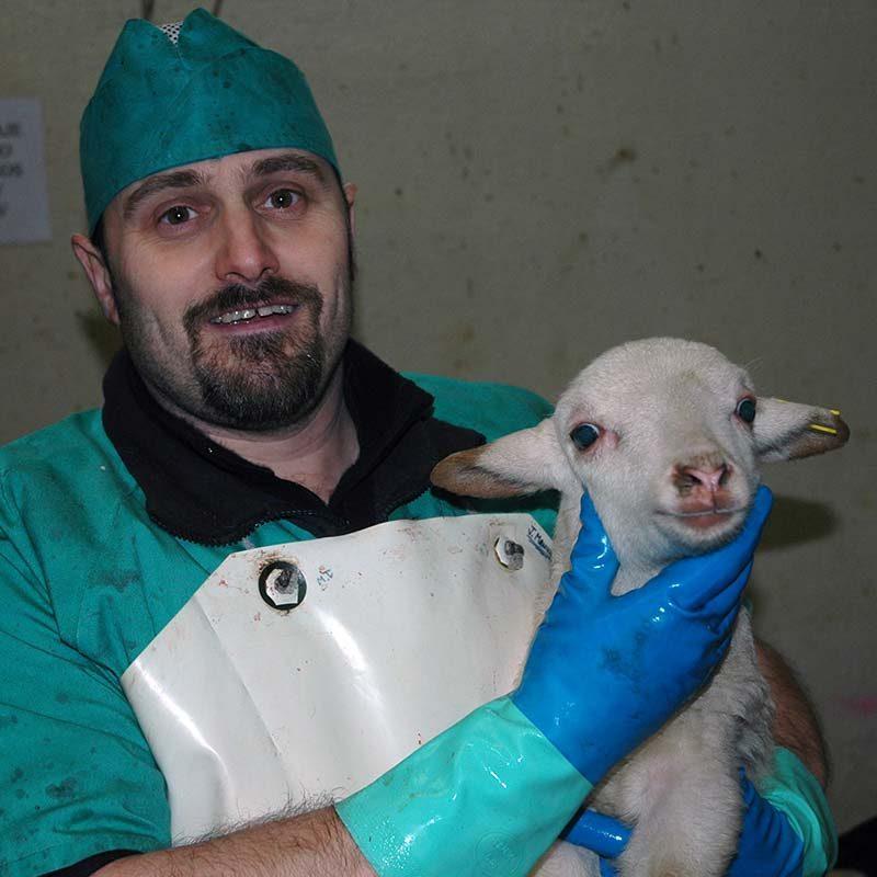 5 Spanish Slaughterhouses