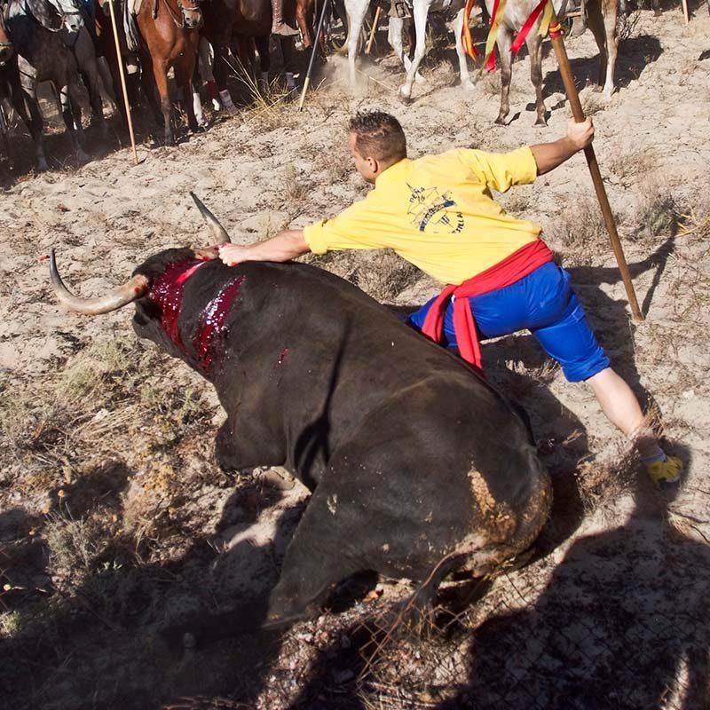 Platanito – Toro de La Vega