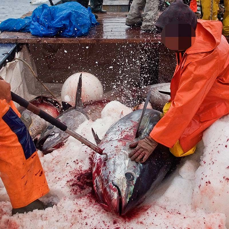 The Killing of Tuna in Carloforte