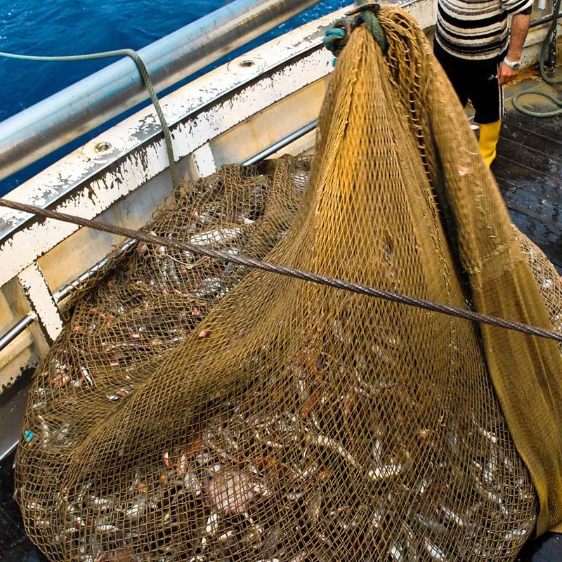 Horrors of Ocean Trawling Exposed