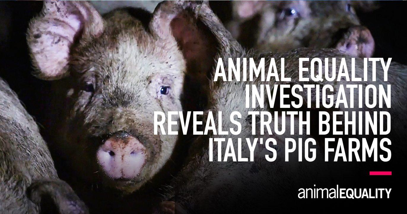 animalequality.org