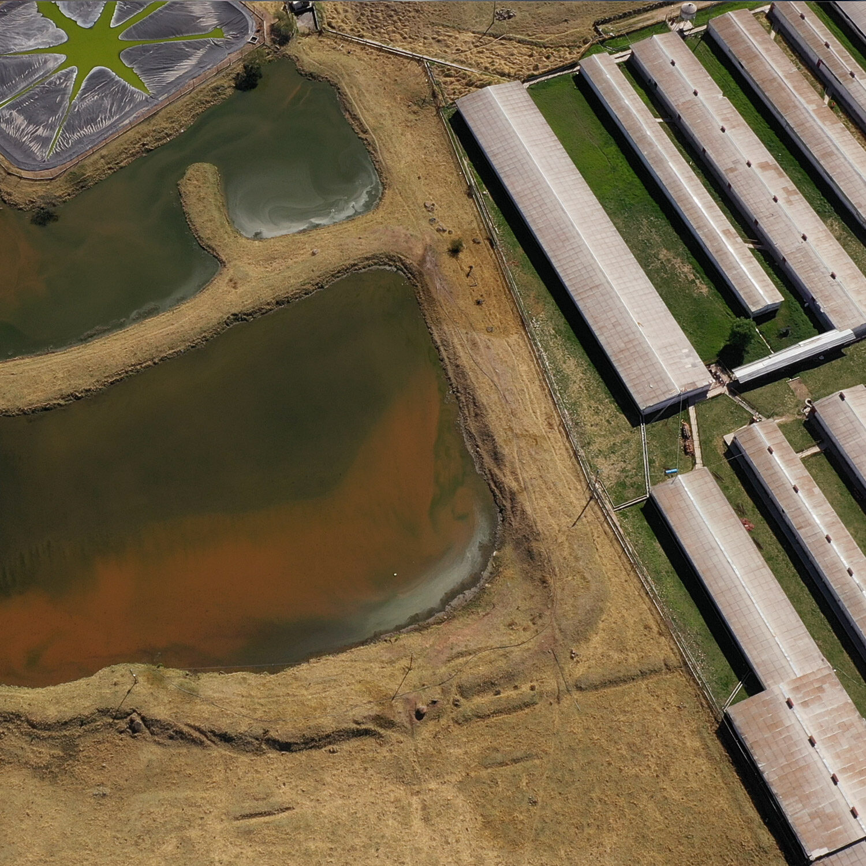 sewage lagoon on industrial farm